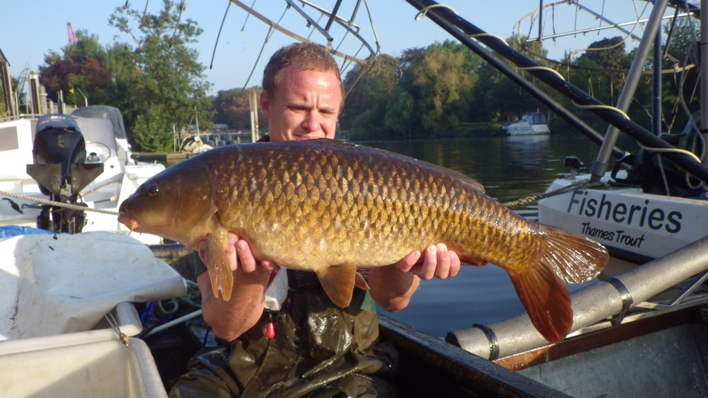 Dave Hellard holding up a large carp on a boat at Molesey Lock, a sign on a boat behind reads 'Fisheries Thames Trout'
